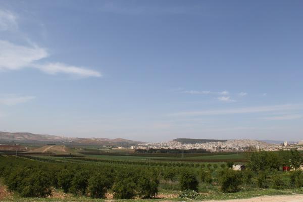 الاحتلال قطع العشرات من الأشجار وخطف مواطنين في عفرين