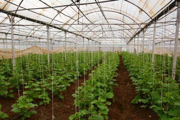 مشروع زراعي بإشراف النساء يساهم في سدّ جزء من حاجة المنطقة من الخضار