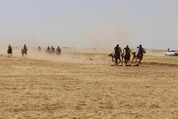انطلاق المهرجان الثامن للخيول العربية الأصيلة في تل حميس