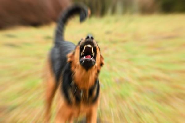 للمرّة الرّابعة على التّوالي.. تركيا تطلق كلاباً مسعورة باتجاه قرى عامودا