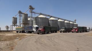 صوامع السلحبية تستقبل محصول القمح للعام الحالي