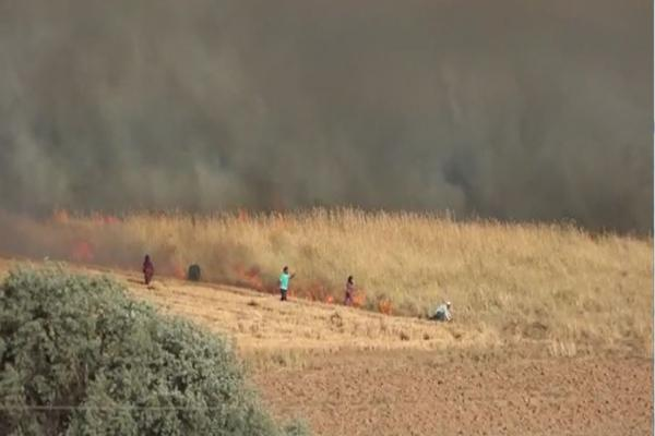 Turkey's mercenaries set fire to Tel Tamr villages people's crops