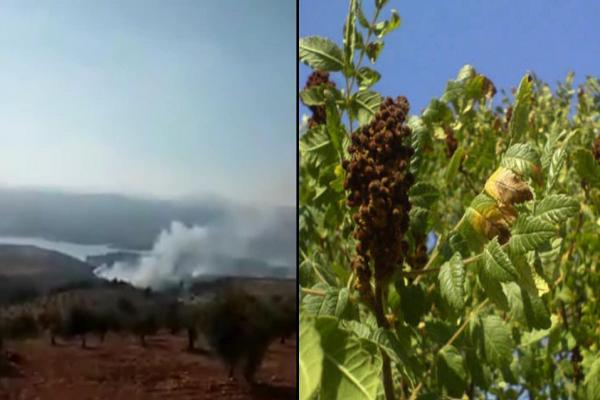 Turkish occupation burns Afrin forests, seizes smac harvest