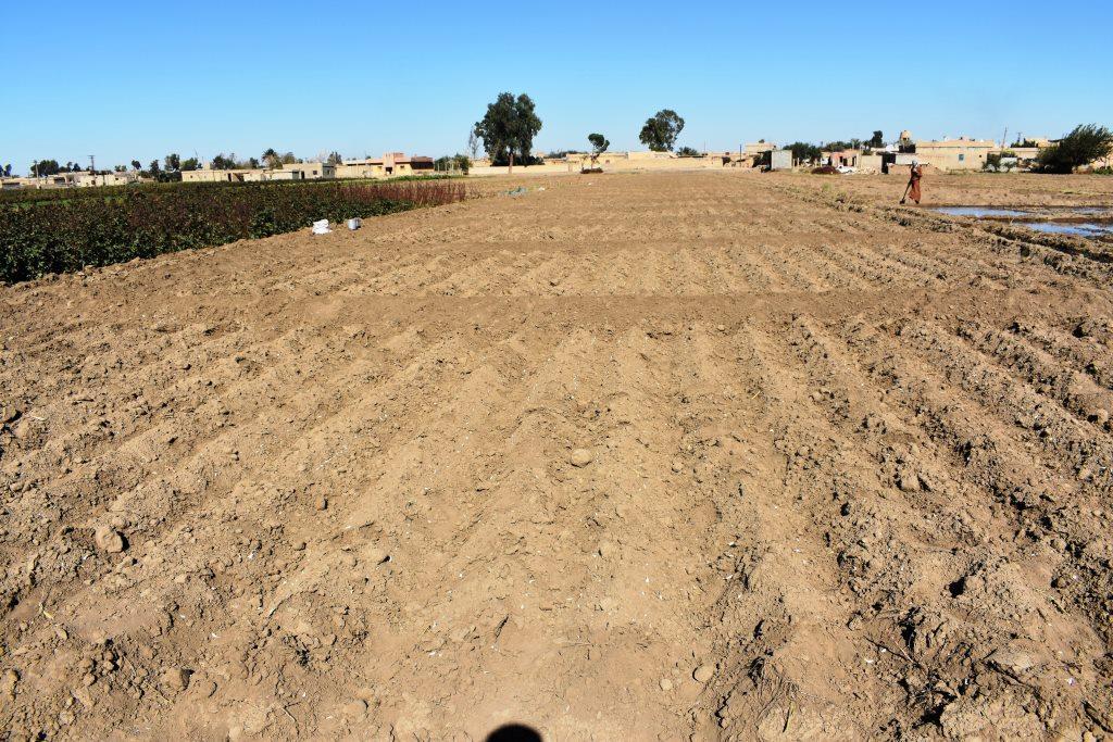 Agricultura próspera en Deri-ez-Zor después de derrotar a IS