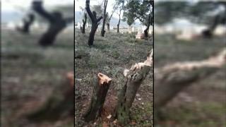 3 ciudadanos de Afrin secuestrados, continúan las violaciones contra la santidad de las personas