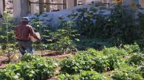 Şêniyên Şêxmeqsûdê gerac veguherî baxçeyeke sûdewar