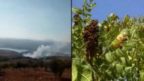 Çeteyan li Efrînê daristanek şewitand
