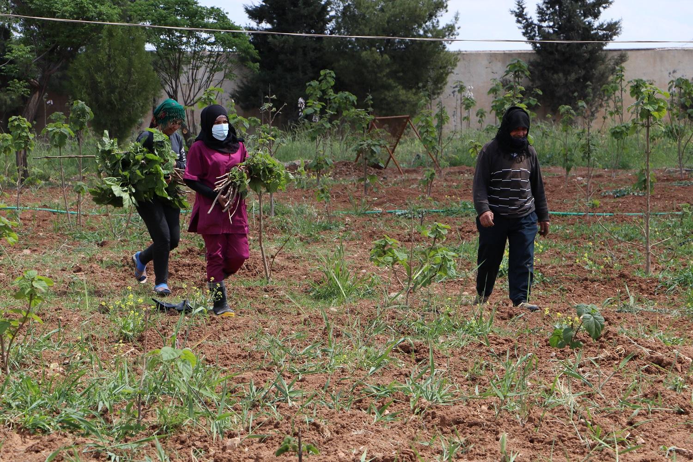 Экологические инициативы северо-восточной Сирии