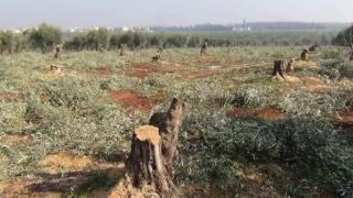 На фоне международного молчания преступления в Африне продолжаются