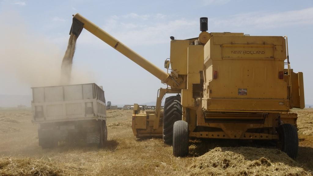 Kobanê ve Qamişlo kantonlarında hasat hazırlıkları