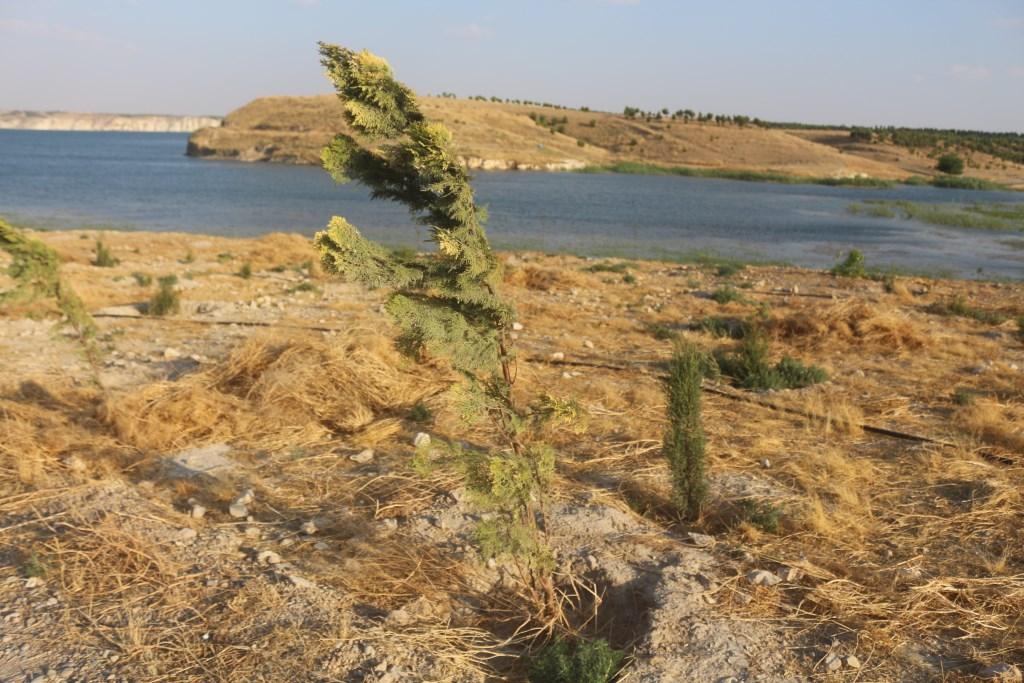 Necm Kalesi çevresinde ağaçlandırma çalışmaları devam ediyor