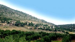 İşgalciler, zeytin ağacı sahiplerinden haraç alıyor