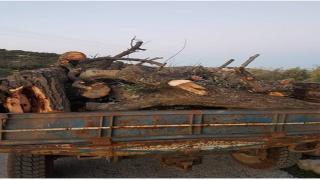 Efrîn'deki talan ve yıkım devam ediyor