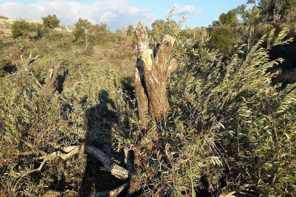 Türk devlet çeteleri Efrîn'de talana devam ediyor