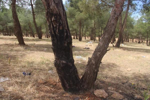 Kobanê'de bir erkek eşini ve oğlunu vahşice katletti