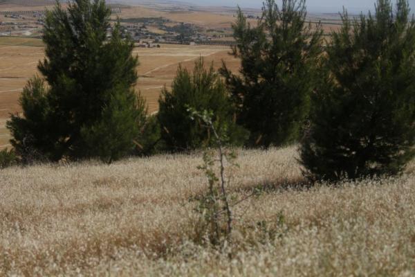 Kobanê'de olası orman yangınlarına karşı tedbirler