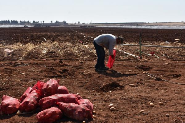 Şehba'da çiftçiler kış tarımına zorluklarla hazırlanıyor